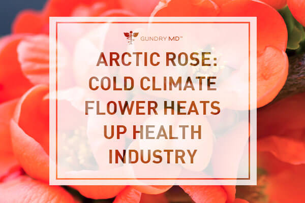 Arctic Rose: Cold Climate Flower Heats Up Beauty Industry