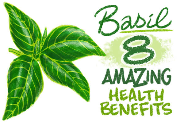 8 Health Benefits of Basil (one may help your love life!)