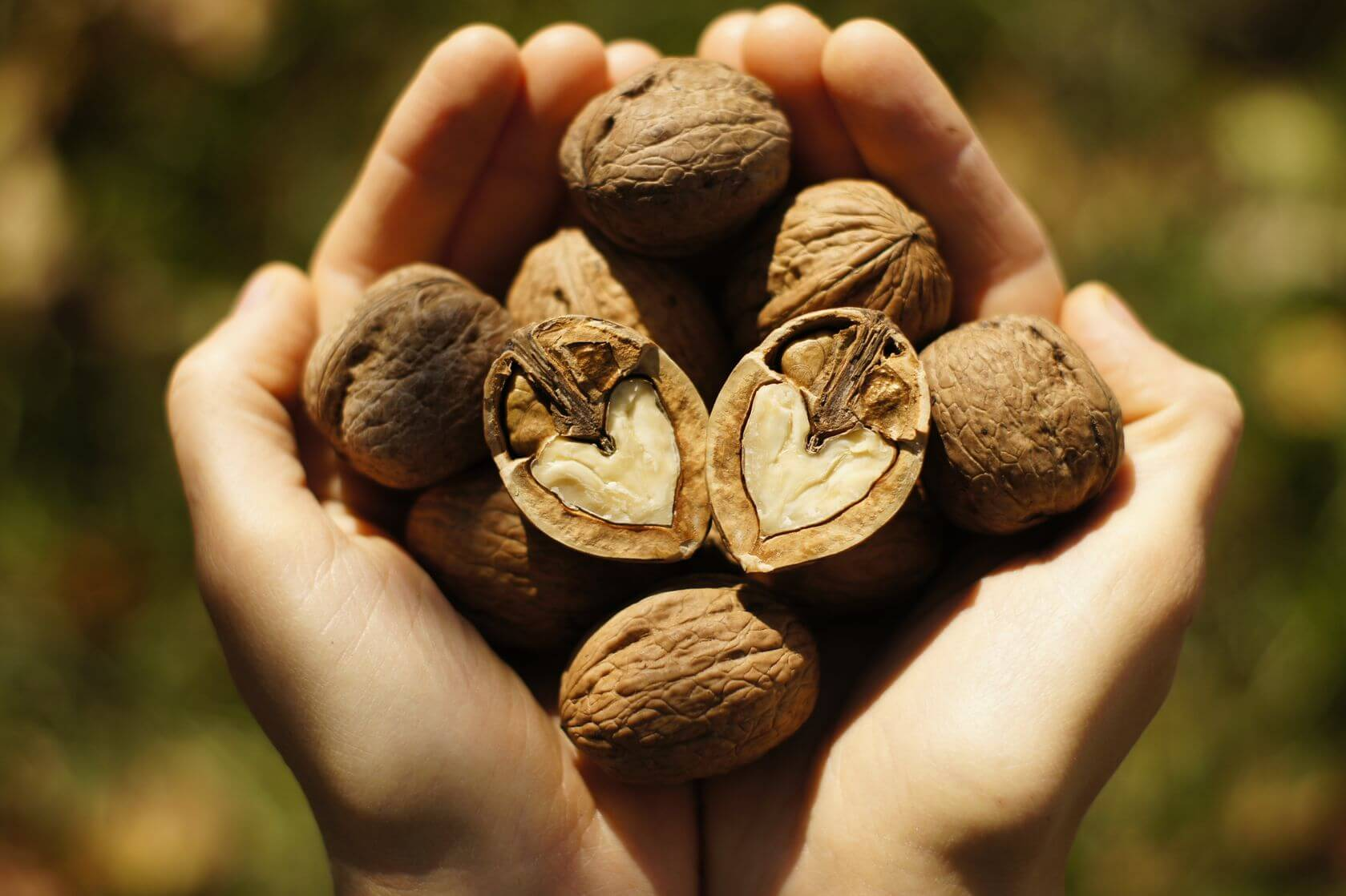 walnuts | Gundry MD