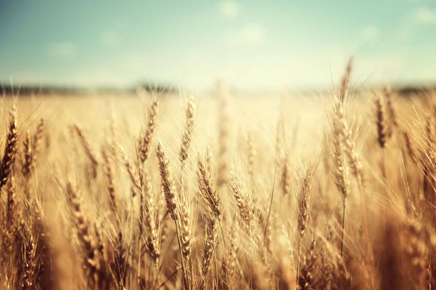 Have a Wheat Sensitivity? Study Shows Lasting Physical Effects