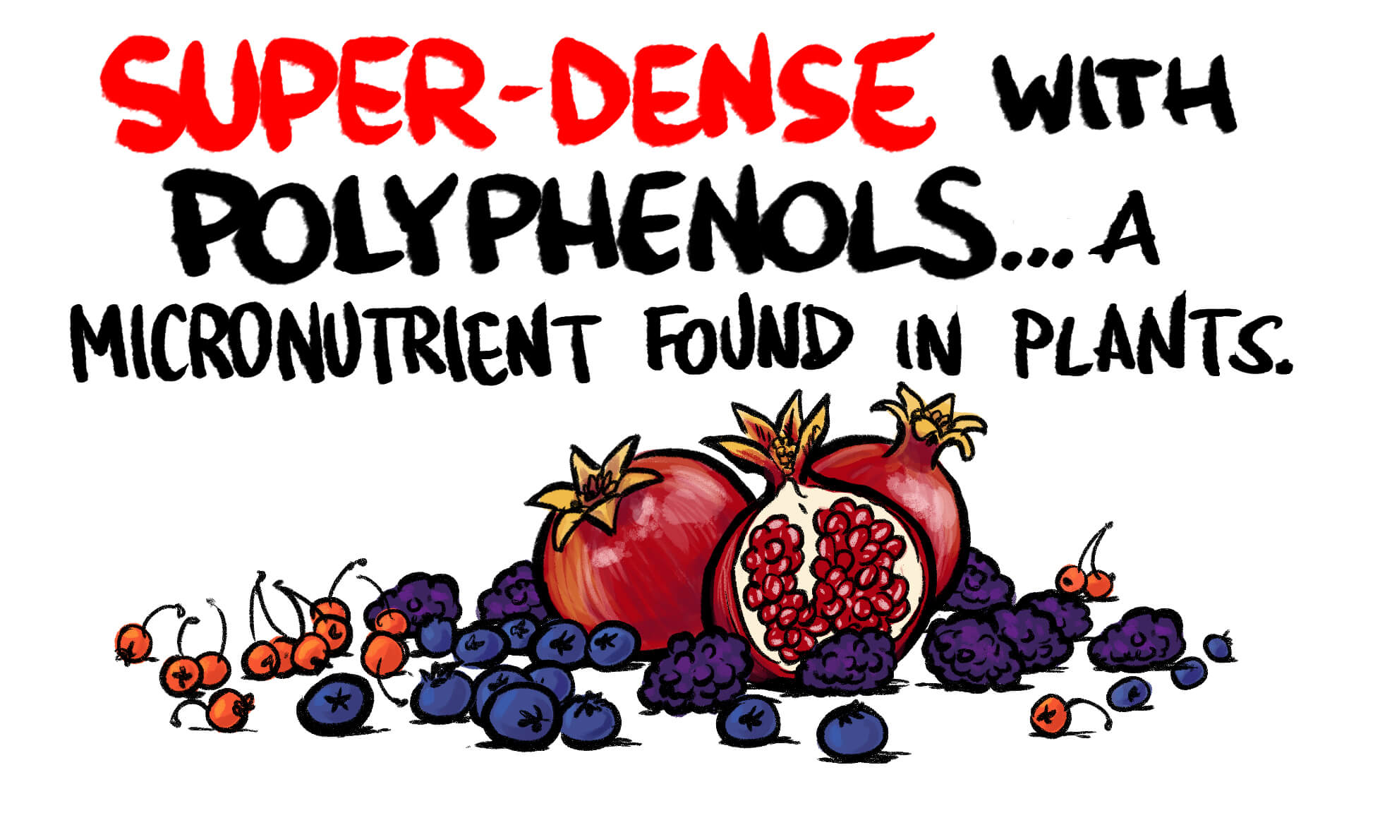 About Polyphenols | Gundry MD