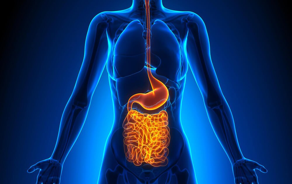 "Should you ""go with your gut""? (digestive health affects decision making)"