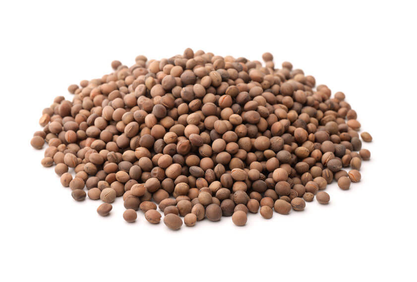 Different Lectins   Gundry MD